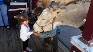 Feeding a donkey in Virginia City